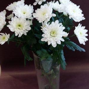 """Хризантема веточная """"Зембла"""" белая"""