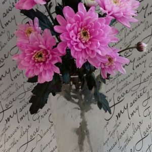 """Хризантема веточная """"Зембла"""" розовая"""